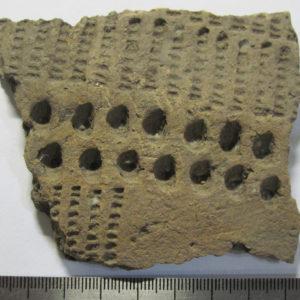 Фрагмент керамики. Глина, обжиг, II-I тыс. до н.э. Стоянка Галическая