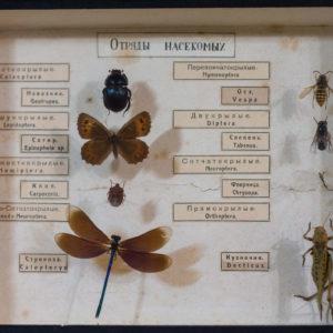 ТМО 11501. Коллекция. Отряды насекомых.Сухой препарат. Сушка, органика. Боровский В.В. 1934-1935 гг.